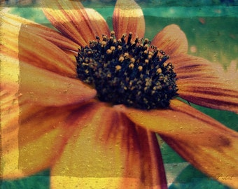 Photography Print Fall Sunflower