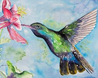 Hummingbird with Pink Columbine 11x14 Giclee Print - Clearance