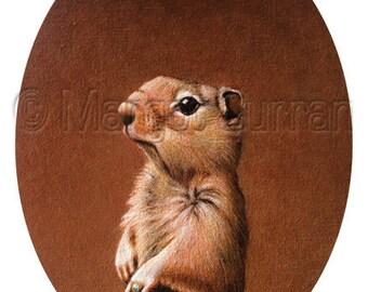 Squirrel postcard 6-pack