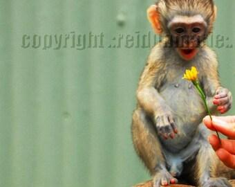 vervet monkey three photography art africa trio smile flower faves green