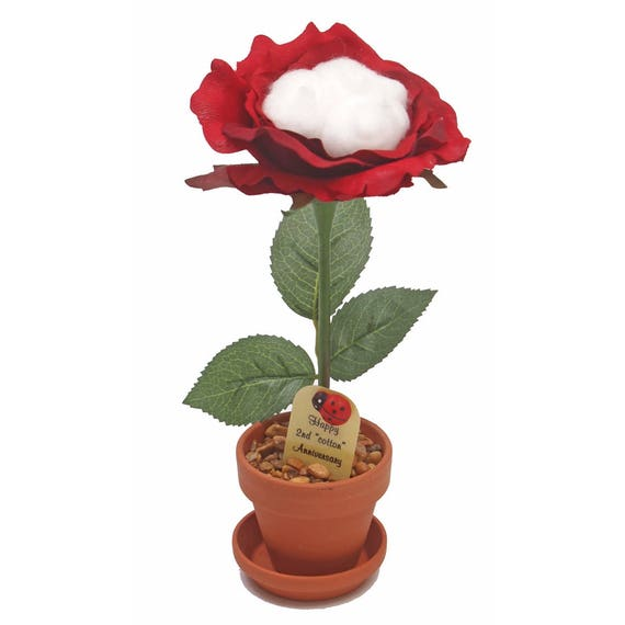 What Is The 2nd Wedding Anniversary Gift: 2nd Anniversary Gift Cotton Rose