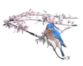 Bluebird limited giclee print