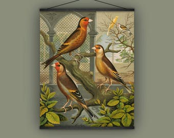 Cage birds, canaries, vintage, antique, 1880s, natural history, wall hanging, banner, home decor, garden