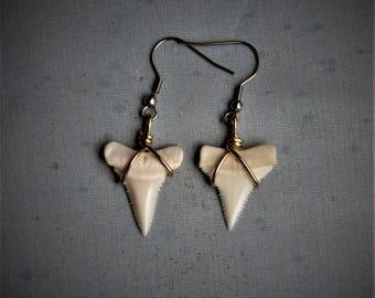 Modern Great White shark tooth earrings  009