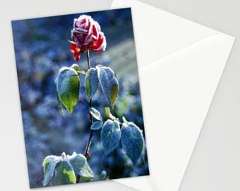Frosted Rose Blank Greetings Card by Sandra Ireland