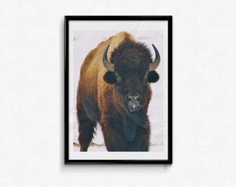 Large Wall Art Bison Print Buffalo Photo Wall Decor Western Rustic Decor Photography Large Poster Prints Fine Art Photography 16x20