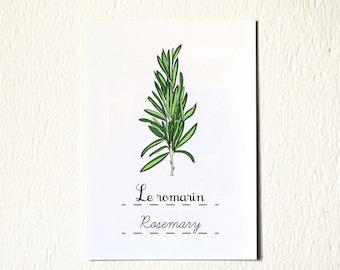 Rosemary 5x7 art print (Herb) French Modern Kitchen Illustration Green