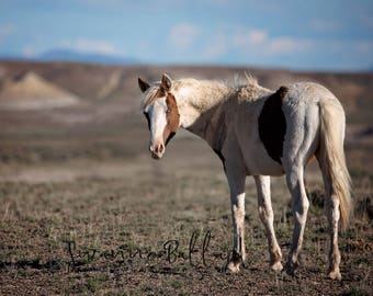 Sand Wash Basin wild mustang, Winchester, Photography Print