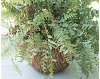 Large Wicker Basket | Woven Basket | Vintage Wicker Planter