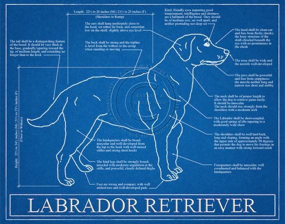 Labrador retriever blueprint elevation labrador retriever malvernweather Gallery