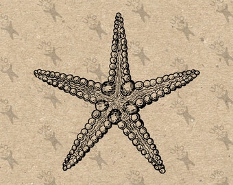 Vintage image Ocean Life Starfish retro drawing Instant Download black and white clipart digital printable graphic decor prints  HQ 300dpi