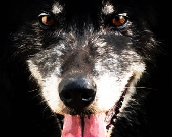 Ted, 3Butterflies Photography, photos, photography, wolf, black and white, dog