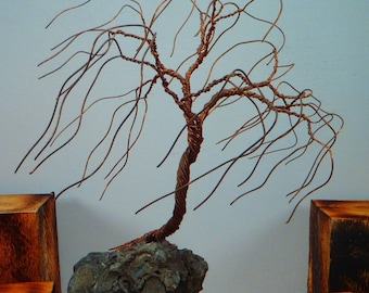 Copper willow in the wind