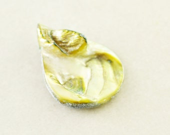 Shell Pendant, Teardrop Pendant, 30mm Green Shell Drop, One