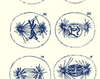 """A121 Rolling Mill (Phases of Cell Division) Low Relief Pattern 2""""x 3.5"""""""
