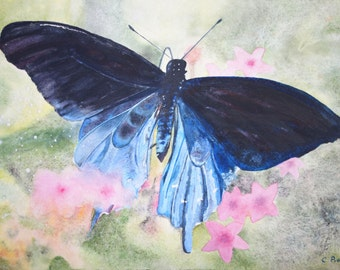 aquarelle : papillon bleu