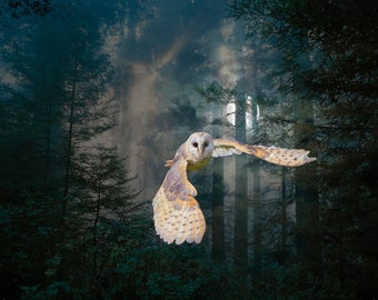 Owl at Midnight Digital Art Print