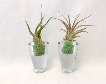 2 Heavy high quality glass displays for succulents and air plants, home, office, hostess gifts
