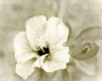Minimilist Black and White Sepia Hibiscus Flower - Fine Art Photograph Print Picture