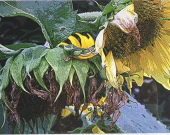 The Flora Collection: Withering Sunflowers by SusanARay of OneHealingStone Studio