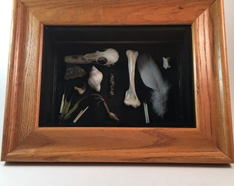 Oddity shadow box