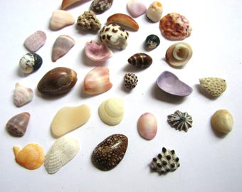 Assorted Miniature Sea Shells, Colorful Collection of Tiny Tropical Seashells, Extra Small Ocean Treasures