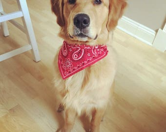 Red Dog Bandana- Over The Collar, Classic Print Cat Bandana, Puppy Bandana