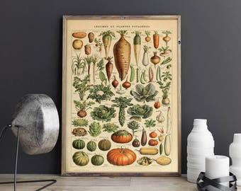 Vegetables Chart| Vegetables Diagram| Legumes| Legumes Poster| Vegetables Poster| Kitchen Wall Poster| Biology Wall Art| Biologist| HBA017