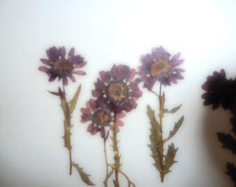 Purple Daisies Romantic Dried Flowers Greeting Card
