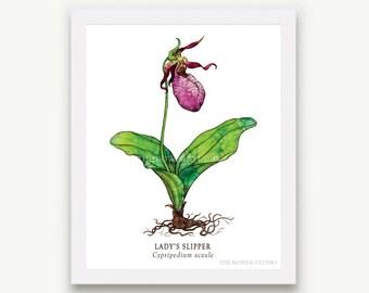 Botanical Lady's Slipper Flower Print - Unmatted