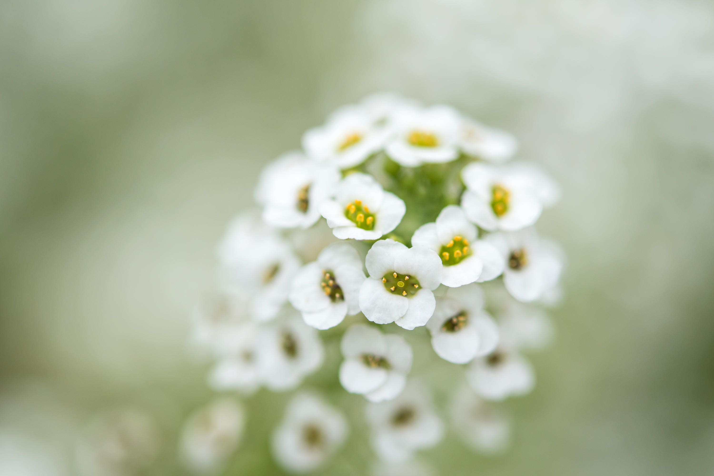 Tiny White Flowers Digital Art Print