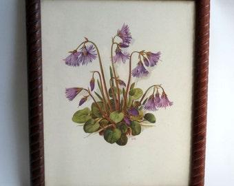 Charming Virginia Bluebells / Harebells / Vintage Wildflowers / Signed AmTR / Framed