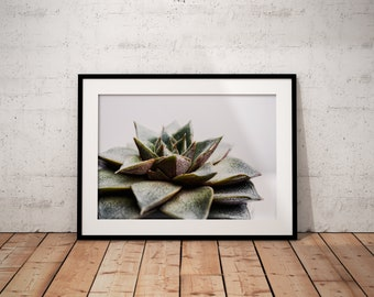 Succulent II | Botanical | Plant | Photo Print