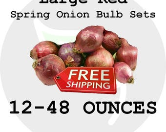 Spring LARGE Onion Bulb Sets (Choice Red) - Organically Grown Seed Onions, Non-GMO - Free Shipping!