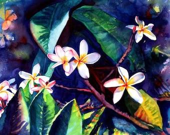 plumeria art  8x10 giclee prints frangipani hawaiian lei flowers plumerias hawaii decor kauai galleries paintings