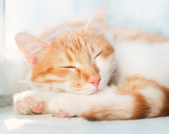 Cute Sleeping Cat Instant Digital Download Art Photography Printable, blue and orange pastels home decor for cat lovers, animal photography