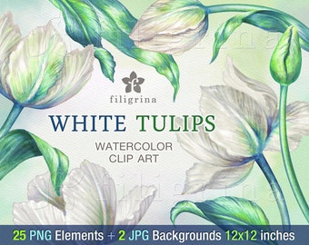 White Tulips WATERCOLOR Clip Art. Flowers arrangement, green leaves, Easter decor spring bouquet. 25 elements, 2 backgrounds. Read about use