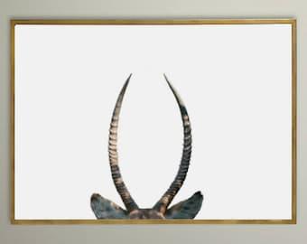 Waterbuck horns
