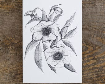 Gift Card Hellebore