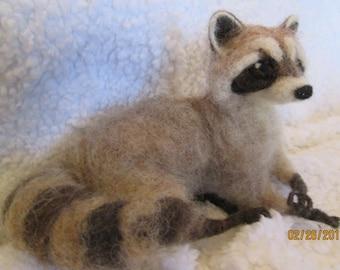 needle felt animal, Life sized young raccoon  custom made for me by Hannah Stiles fully posable, finest needle felt work around