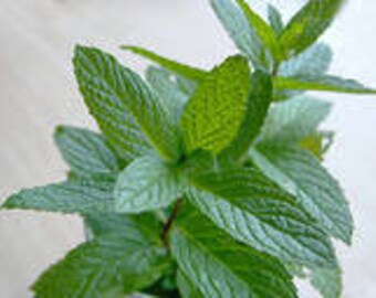 Citrus Mint Essential Oil Blend Relaxing Uplifting Clarifying