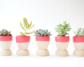 Mini Planters set of 5 by Wind and Willow Home, neon pink, wedding favors, modern home decor