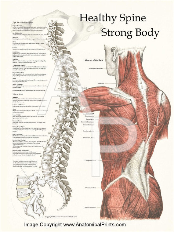 healthy spine strong body poster 18 x 24