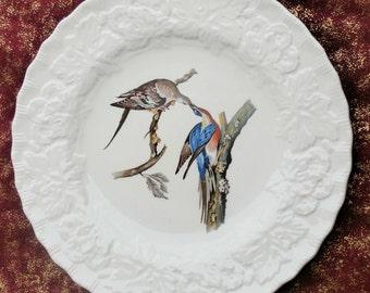 Meakins China Birds of America Passenger Pigeon Plate Audubon Plate 62 Vintage Collectible Bird
