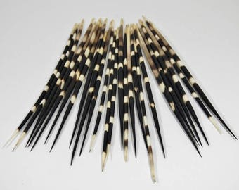 Large African Porcupine Quills - Set of 10 (184-02L) 6D/8E