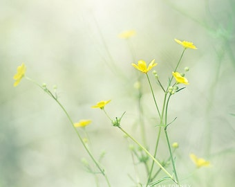 Buttercups, Yellow Flower Photography, Wildflowers Print, Spring Flowers, Large Wall Art, Yellow Nursery Art, Dreamy, Little Flowers Photo