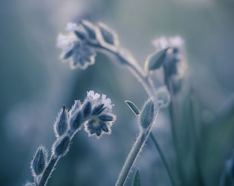 Ethereal Blue Photograph, Dreamy Nature Picture, Vertical Wall Art Home Decor, Living Room Wall Art, Bedroom Decor, Botanical Photo Print