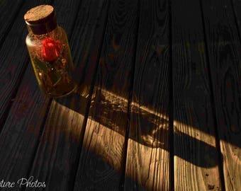 Rose in a jar.
