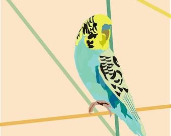 Budgie bird art print