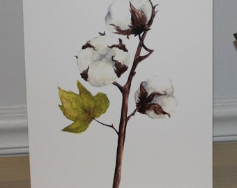 Cotton Blossom 8x10 Watercolor Print